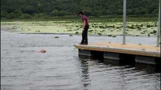 dock diving golden retriever!