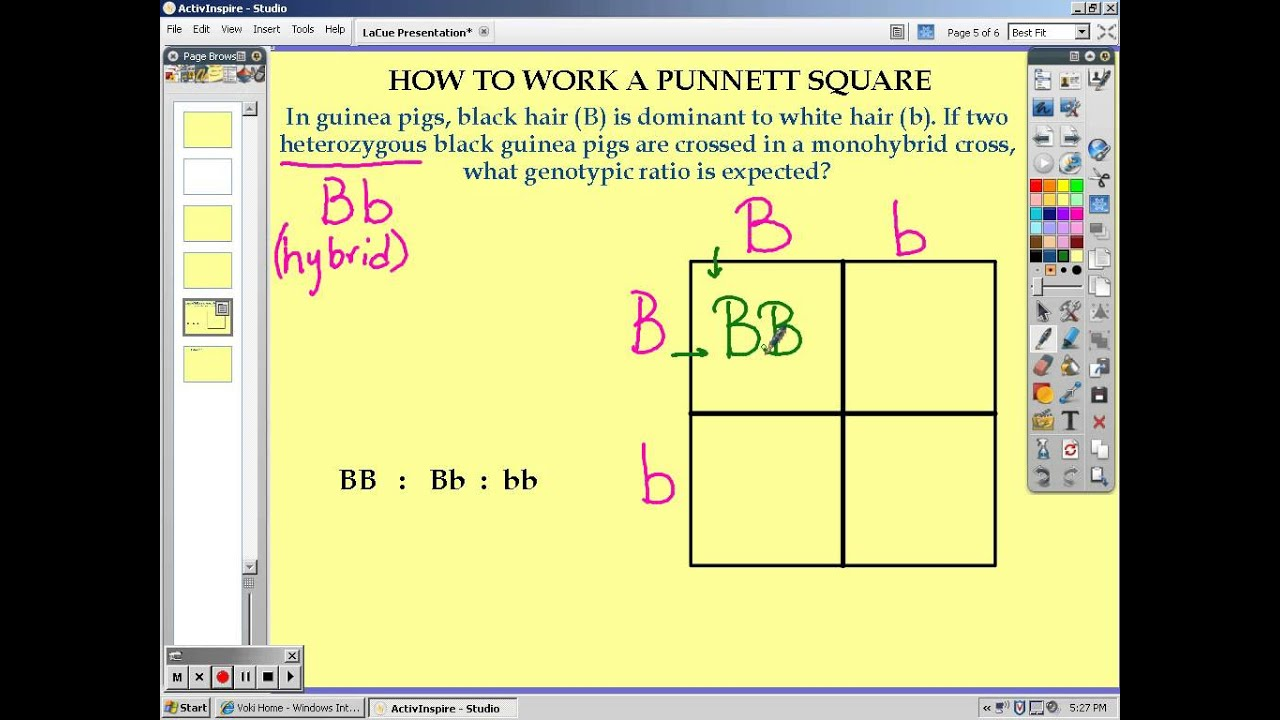 how to create punnett squares