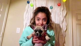 Download Dachund Puppy Haul Video Thsiamcom