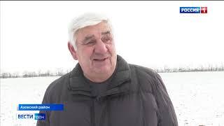 Аграрии Ростовской области рассказали, как резкий мороз повлиял на урожай