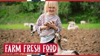 Farm FRESH FOOD   NORWAY