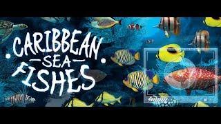 Caribbean Sea Fishes | Simulation Game | Gameplay