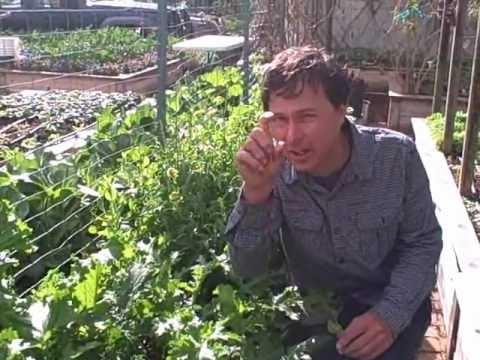 Vegetables You Can Grow in the Winter Edible Garden