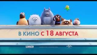 «Тайная жизнь домашних животных» — Вы дома VS вас нет дома: фильм в СИНЕМА ПАРК