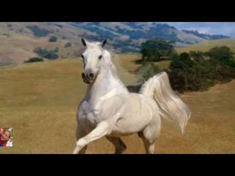 cuento-para-pensar-y-tener-en-cuenta...historia-del-caballo-blanco-.ed-susanalake