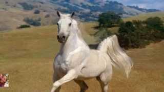Cuento  para pensar y tener en cuenta...Historia del caballo blanco .Ed Susanalake