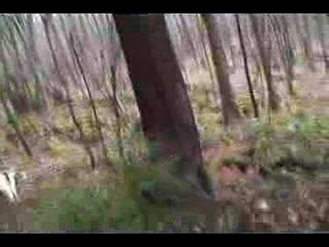 West virginia bear hunting with hounds youtube for Virginia out of state fishing license