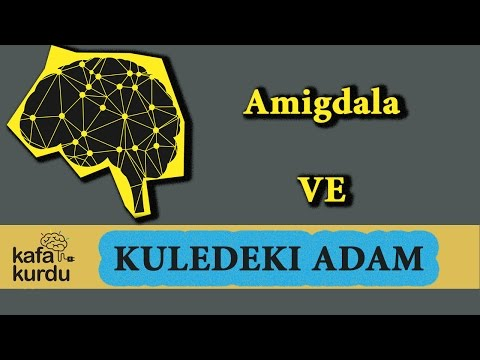 Amigdala Üzerine Yaşanan Gerçek Bir Olay