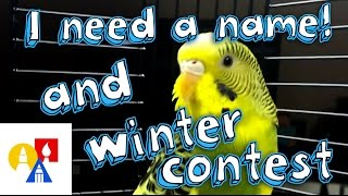 I Need A Name + Winter Art Contest!