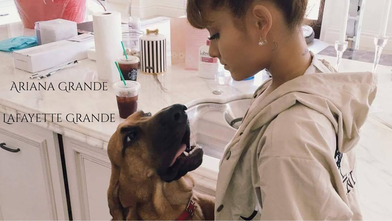 Ariana Grandes Dogs
