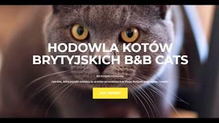 HODOWLA KOTÓW BRYTYJSKICH B&B CATS