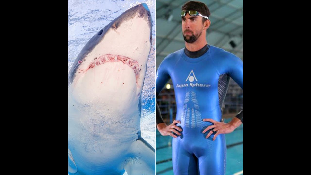 Michael Phelps didn't actually race a real shark on TV