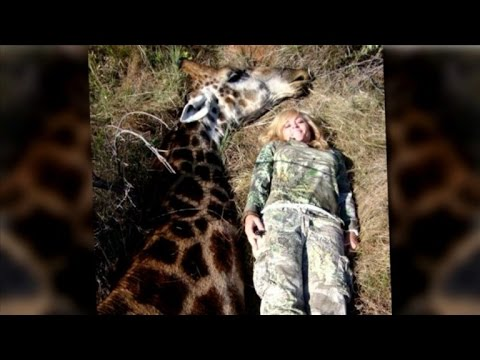 Thumbnail: Giraffe Hunter Gets Death Threats after Ricky Gervais Tweets Her Picture