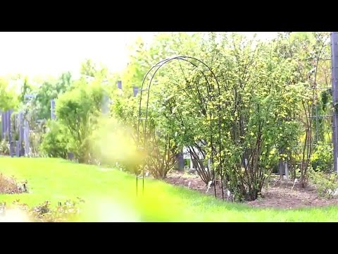 Arco per rampicanti e rose da giardino youtube for Rose da giardino