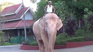 ช้างเผือกพม่า  White elephants