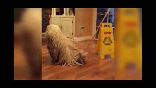 Dog Wins and Fails Try not to laugh at these girls and dogs!