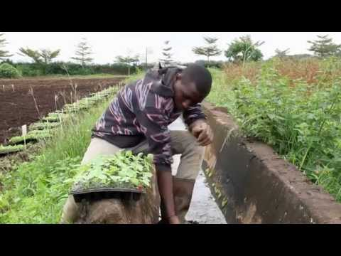 Cultivating Nutritious Food Systems: Stories from East Africa