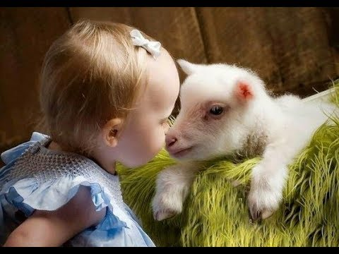 Cute baby animals Videos cute moment of the Babies and animals Compilation