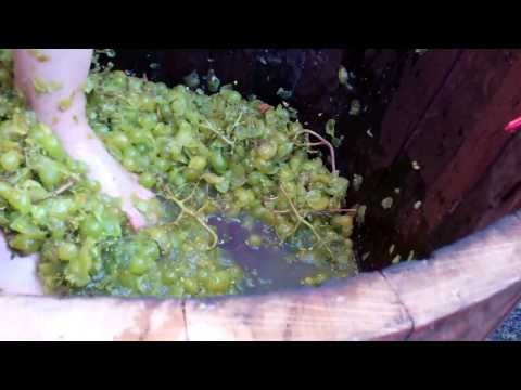 Watch the Grape Stomp Pros at Willamette Valley Vineyards Grape Stomp Finals