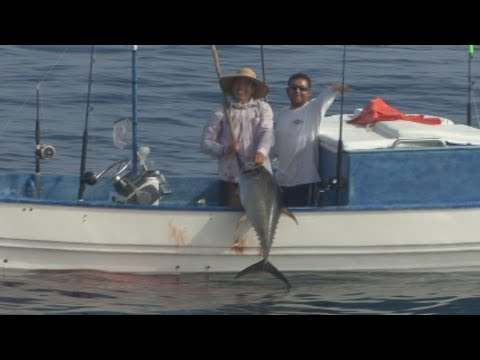 Reeling in a Yellowfin tuna from a panga offshore Puerto Vallarta Mexico
