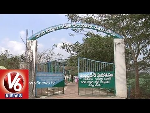 Uppalapadu Birds Sanctuary Attracts Tourists - Guntur