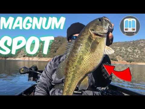New Melones Lake Bass Fishing.(Finesse Bait Underground)