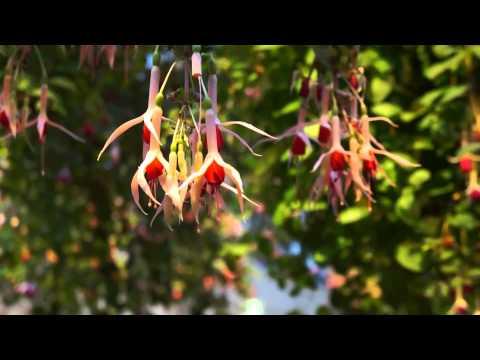 Japan2013 Part11 สวนดอกไม้ที่สวยที่สุด Nabana no santo