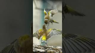 Красивые птички красивая природа смотрите и не забудьте поставить лайк