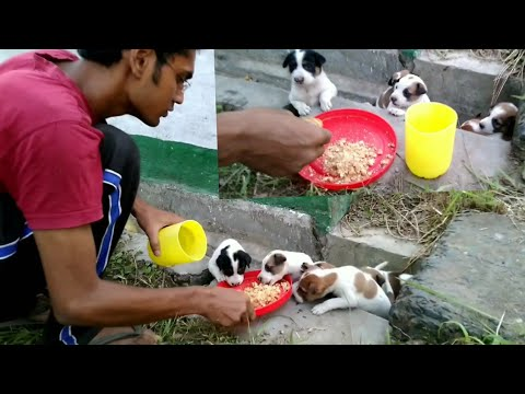 feeding Street puppies 🐕 🐕 🐕
