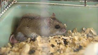 Полевые мыши способны различать числа. Какие экзамены на сообразительность смогли сдать грызуны?
