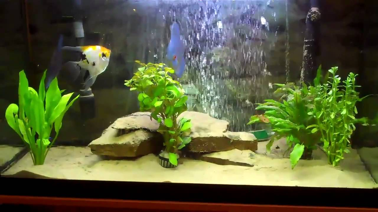 Discus Aquarium Sand And Planted Youtube