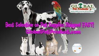 small dog shoes online in the USA small dog shoes