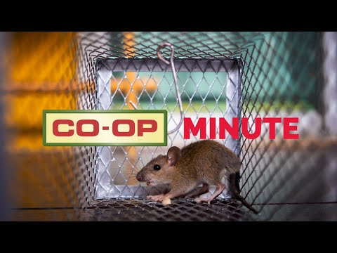 Co-op Minute: Rodent Removal Products