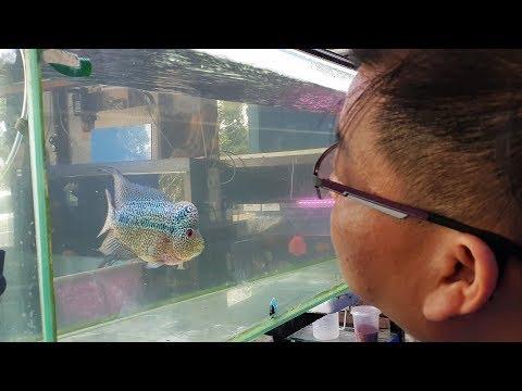 LIOW VIDEO: Bought Kamfa Flowerhorn Tank At Fish Farm 买花罗汉鱼缸