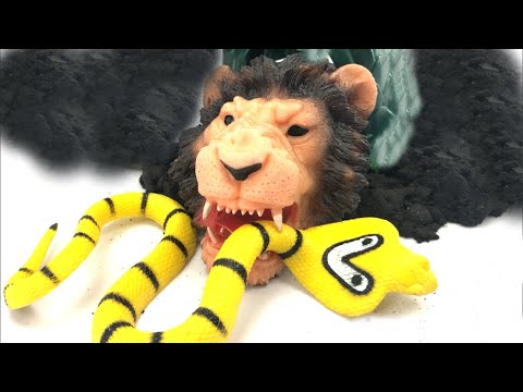 Farm Animal Learning With Fun Puzzle And Lion Puppet And Huge Snake