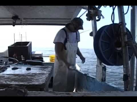 COMMERCIAL FISHING FOR BLUE RUNNERS WITH BANDITS