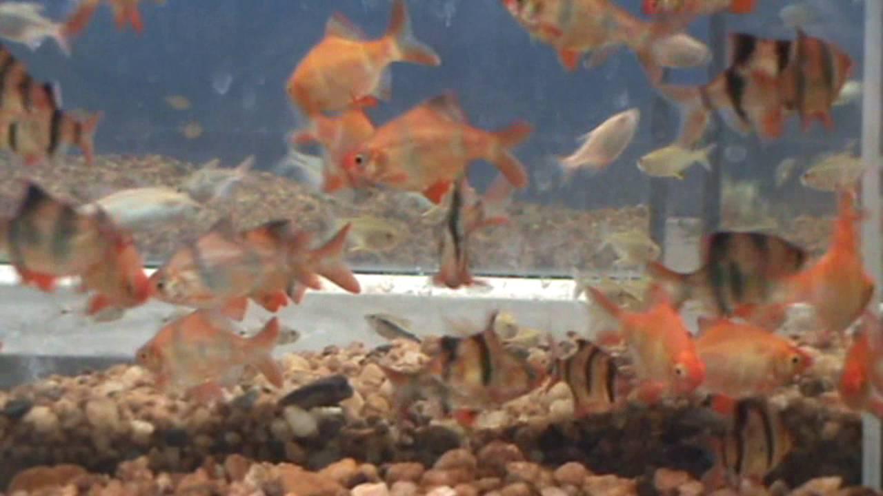 Angel Aquarium (Pvt) Ltd | Home