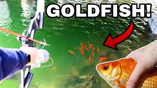 BOWFISHING For INVASIVE GIANT GOLDFISH!