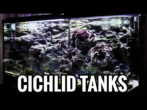 How to Aquascape Your African Cichlid Tank