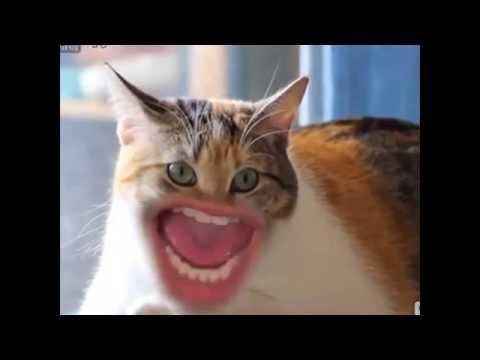 Кошкогифки» (смешные гифки с котами — 17 штук)