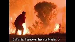 Incendies en Californie: un homme sauve un lapin du brasier