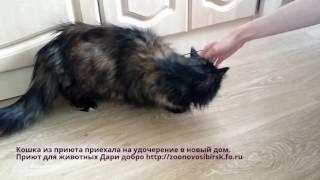 Счастливая кошка из приюта приехала на удочерение в новый дом   shelter for homeless animals