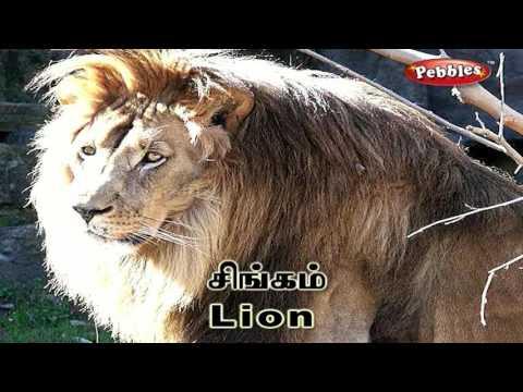 Preschool Words & Sentences in Tamil & Hindi | Zoo | Learn Animals Names | Kids Learning Video