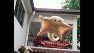 Полёт сахарной сумчатой летяги Лучшее наступление животных в мире Армия домашней хозяйки Десант