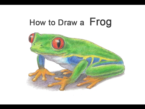 How to Draw a Frog (Red-Eyed Tree Frog) - YouTube