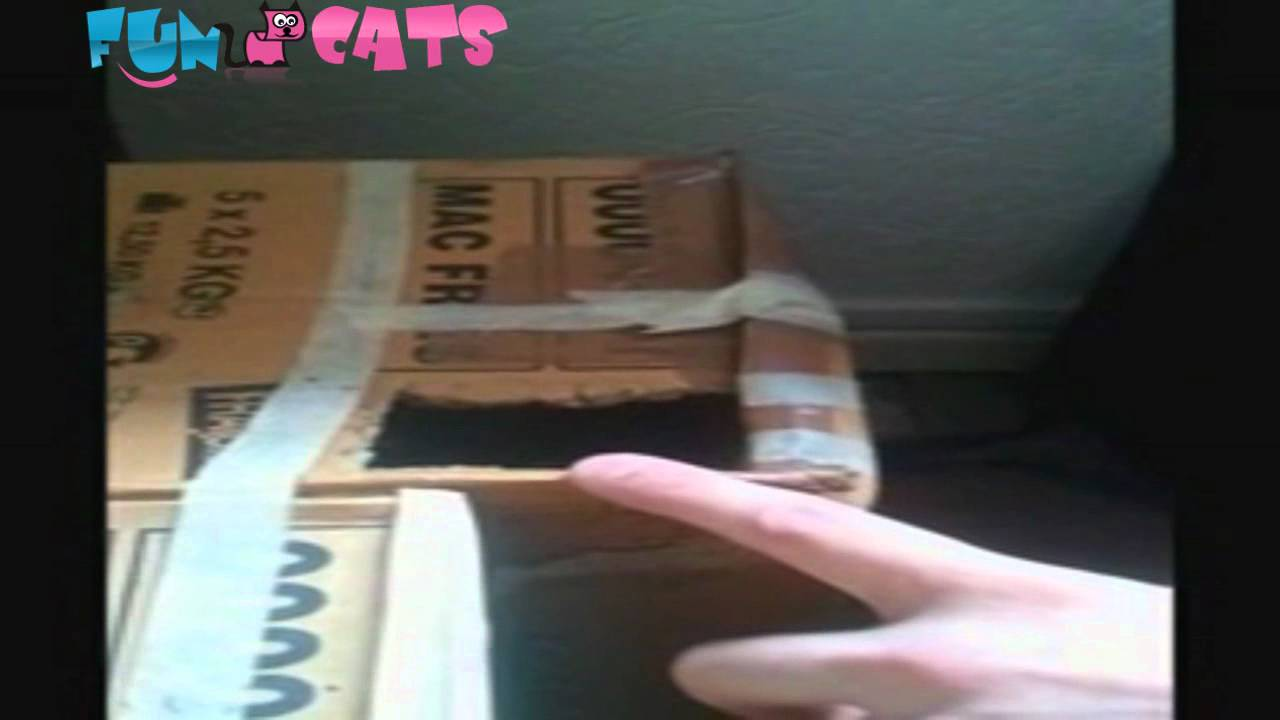 Images - Dont Touch My Box