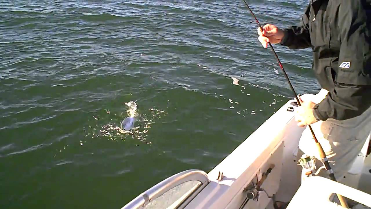 Cape lookout harkers island nc albies 2010 youtube for Cape lookout fishing report