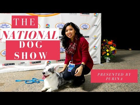 National Dog Show Philadelphia  Youtube