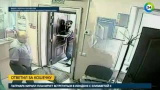 Пациент во Владивостоке избил ветеринара мертвой кошкой