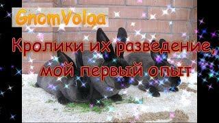 Кролики их разведение, мой первый опыт / субтитры(, 2017-01-23T22:00:37.000Z)